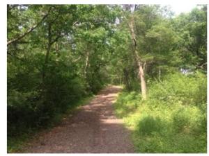 Trail Run at Battle Creek
